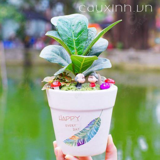 cây bàng singapore 01
