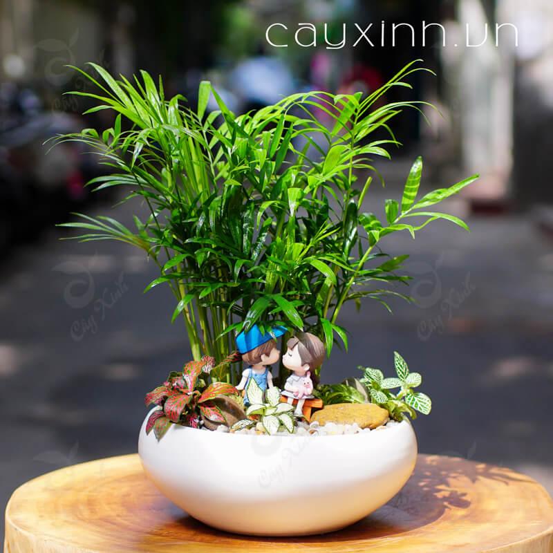 cây cau tiểu trâm tượng trưng cho tình yêu