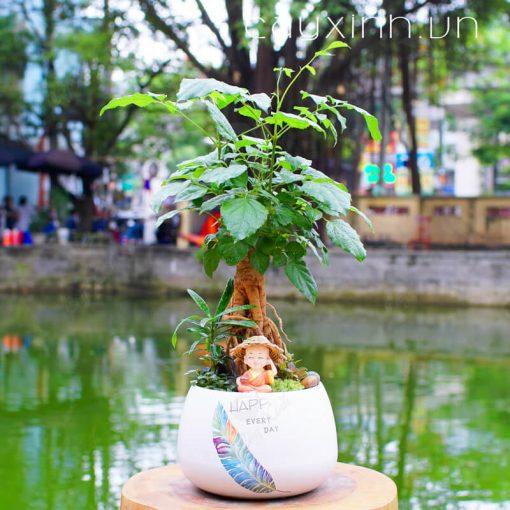 cây hạnh phúc 02