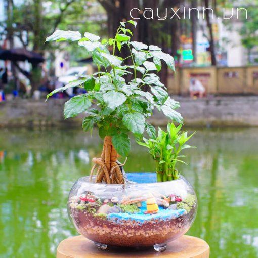 cây hạnh phúc 03