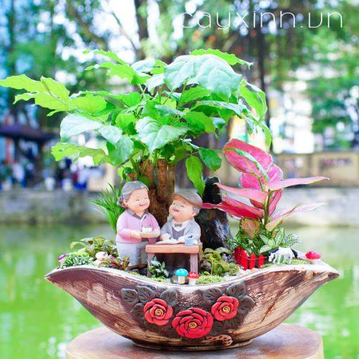 cây hạnh phúc 06