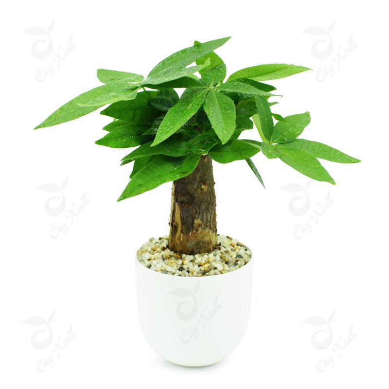 Lựa chọn 7 loại cây hợp với người mệnh hỏa để tăng tài vận