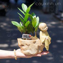 cách trồng cây kim tiền
