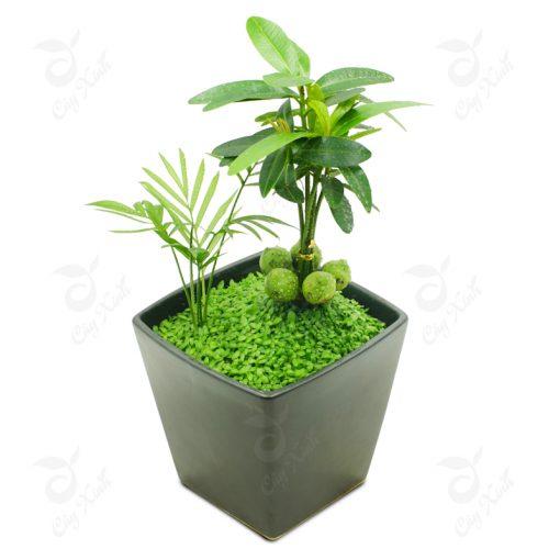 cây tài lộc