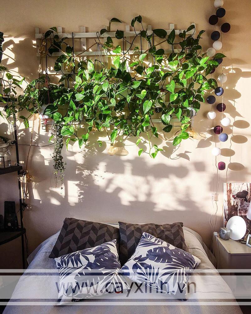 cây vạn niên thanh lọc không khí trong phòng ngủ