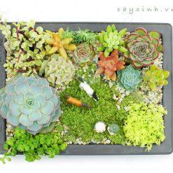 tiểu cảnh terrarium chậu nhựa