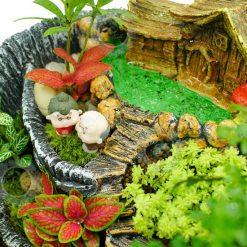 tiểu cảnh terrarium