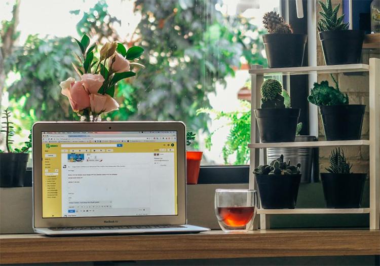 cây cảnh mini để bàn làm việc