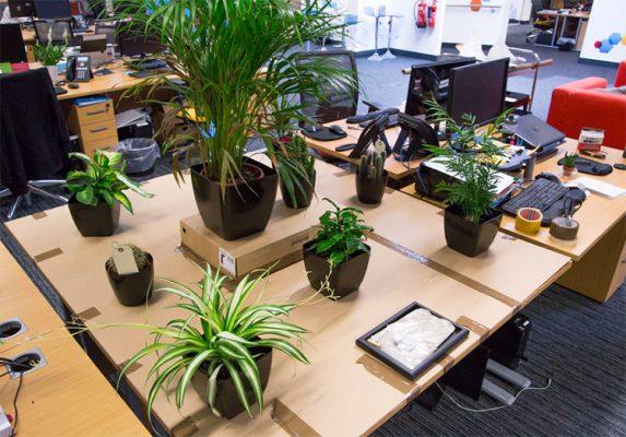 cây cảnh để trong văn phòng nhỏ