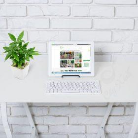 Hình ảnh cây kim ngân để bàn làm việc
