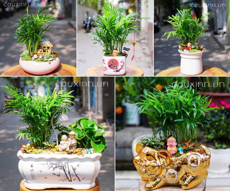 trồng cây phong thủy trong nhà