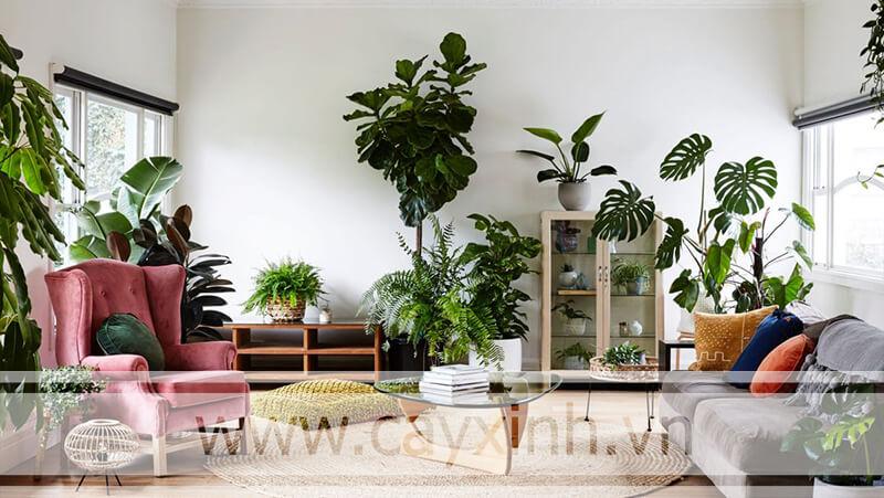 cây trồng trong nhà