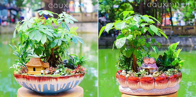 tiểu cảnh bonsai