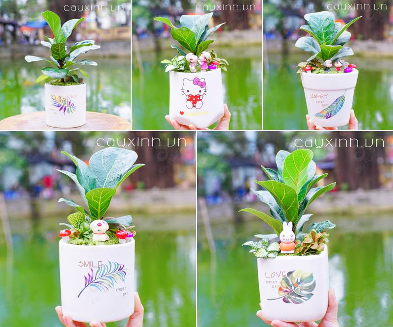 trồng cây phong thủy