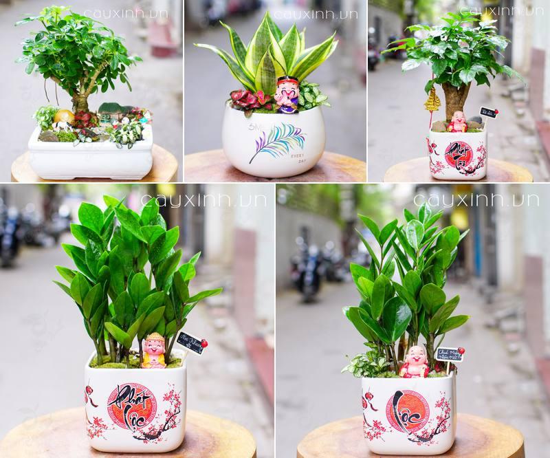cây phong thủy trồng trong nhà