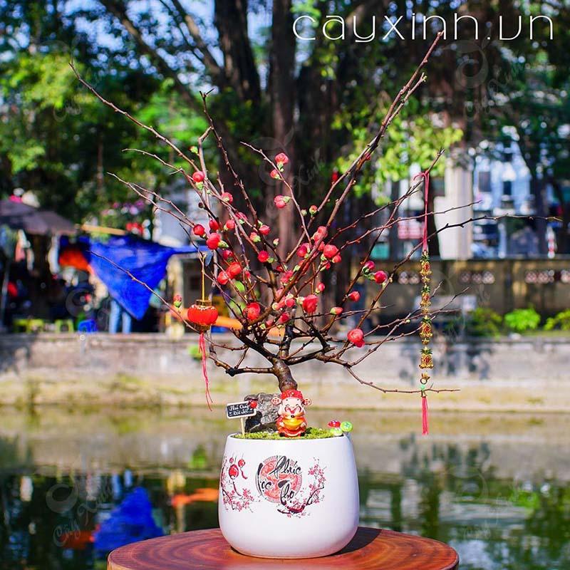cây Mai đỏ