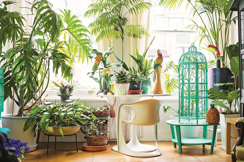 các loại cây không nên trồng trong nhà