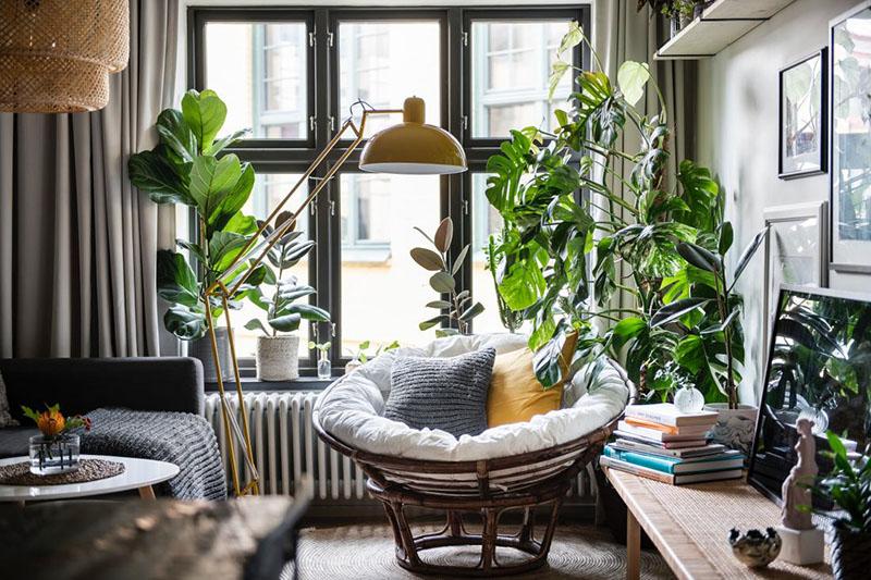 cây trong trong nhà
