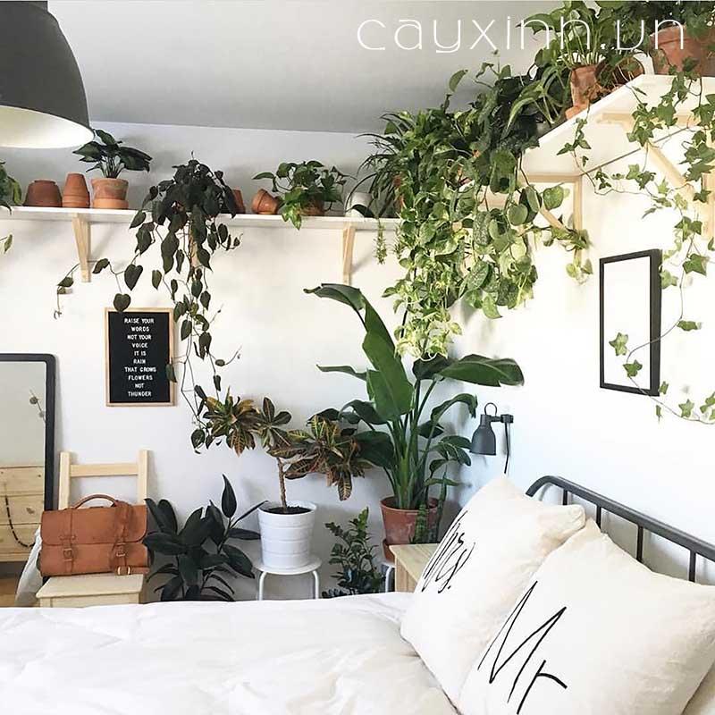 cây phong thủy trong phòng ngủ