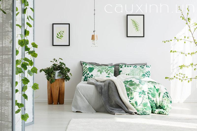 có nên trồng cây trong phòng ngủ