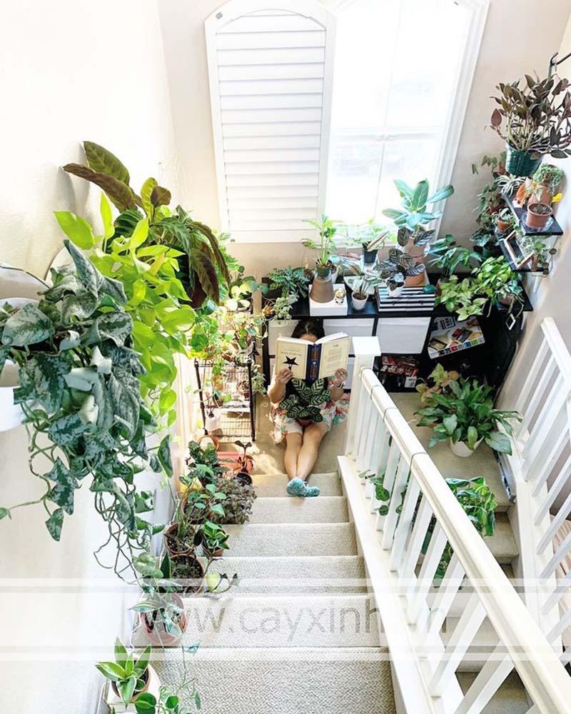 cây cảnh để bậc cầu thang