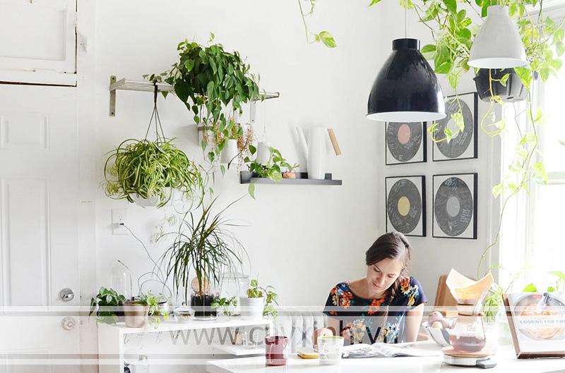 cây trang trí phòng bếp