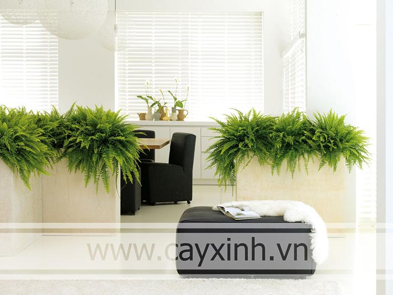lợi ích của cây xanh văn phòng