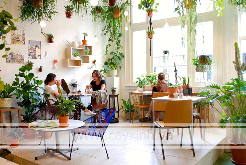 cây cảnh trang trí quán cafe