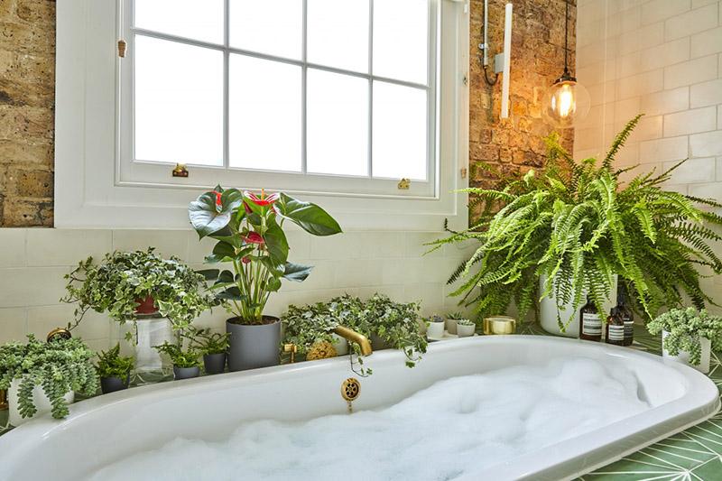 cây trồng trong nhà tắm