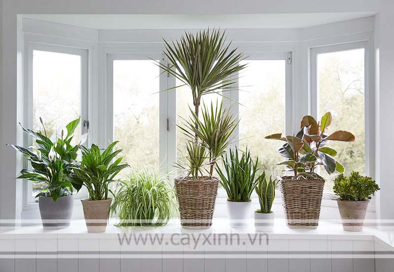 thanh lọc không khí trong nhà bằng cây xanh