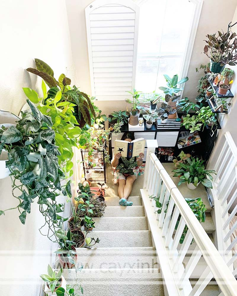 cây để cầu thang