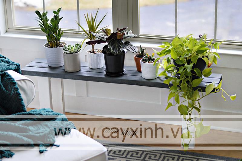cách chăm sóc cây trồng trong nhà đơn giản