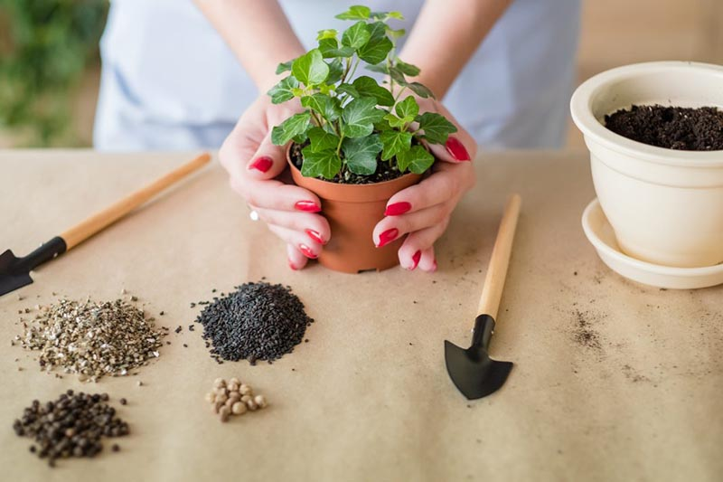 chăm sóc cây trồng trong nhà