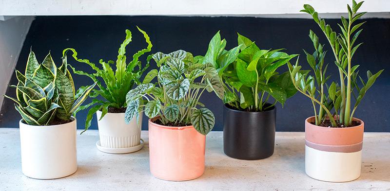 5 vị trí trong nhà cần thanh lọc không khí bằng cây xanh