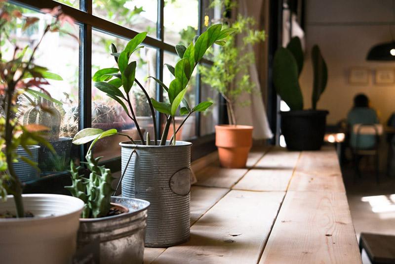 lợi ích trồng cây trong nhà