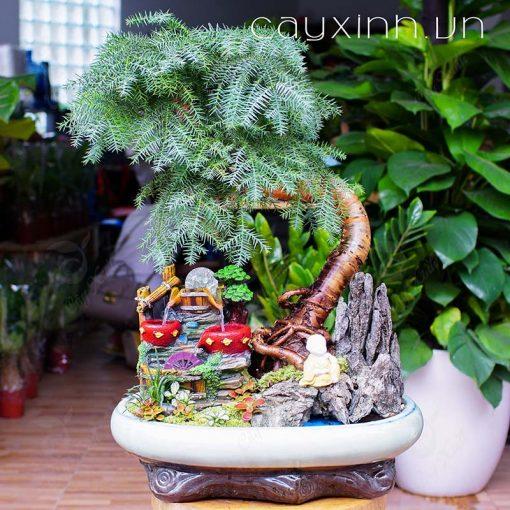 Loài cây phong thủy biểu tượng của phú quý
