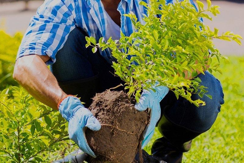 Cây trồng trên mặt đất, chưa có chậu